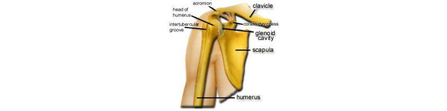 Tratamentul durerii in musculatura piqua a articula?iei ?oldului